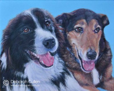 Dog Portrait of a Border Collie and a Lurcher X