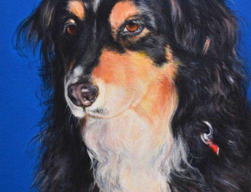 PHOEBE – AUSTRALIAN SHEPHERD DOG PORTRAIT