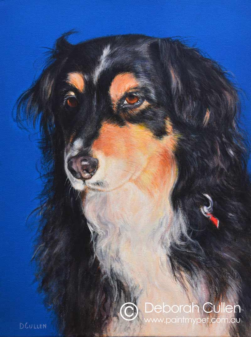Australian Shepherd Dog Portrait