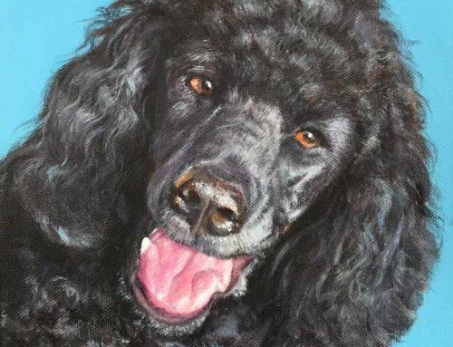 Tosca – Black Poodle Dog Portrait