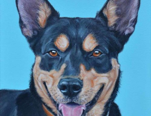 Digger – Hunterway Kelpie Dog Portrait