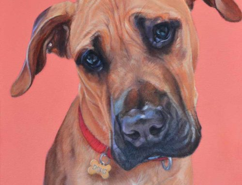 Doug – Great Dane x Bull Mastiff Painting