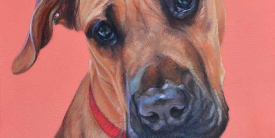 Doug Great Dane x Bull Mastiff Painting