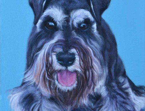 Polly – Miniature Schnauzer Dog Portrait