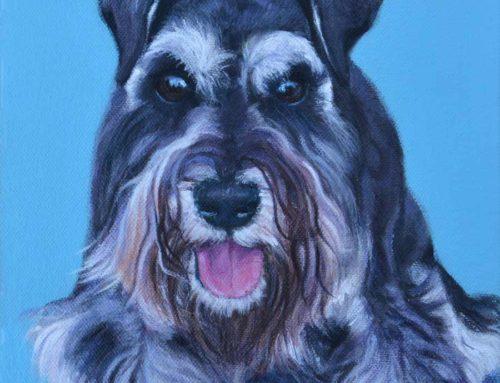 Polly – Miniature Schnauzer Dog Portrait