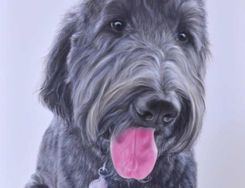 Maisie – Groodle Dog Portrait Painting