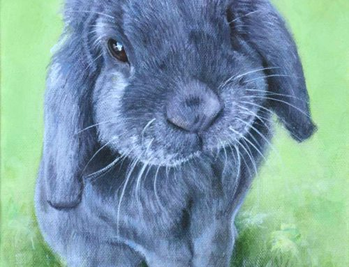 Twinkle – Mini Lop Rabbit