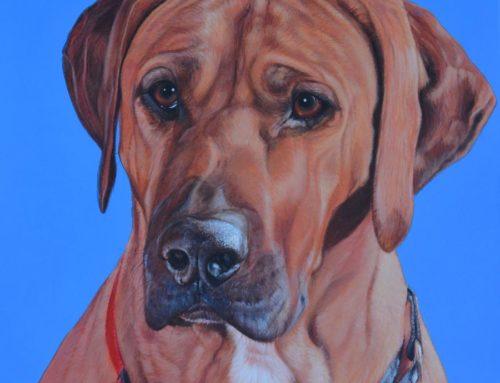 Ziggy – Rhodesian Ridgeback Painting