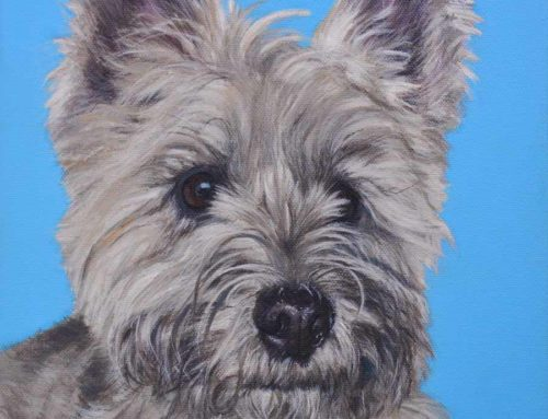 Bobbi – Cairn Terrier Dog Portrait Painting
