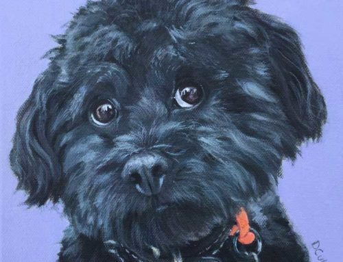 Soot – Maltese x Poodle Dog Portrait Painting