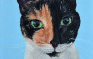pet portrait of a chimera cat