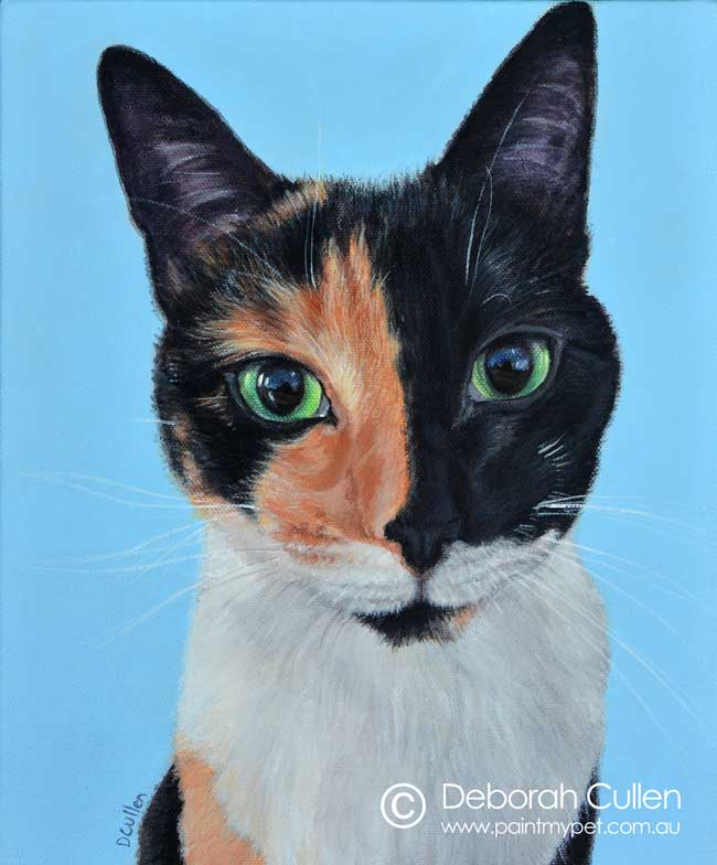 pet portrait of a chimera cat