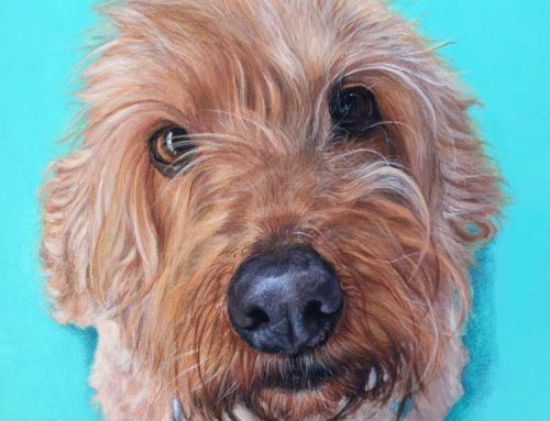 Gypsy – Spoodle Dog Painting