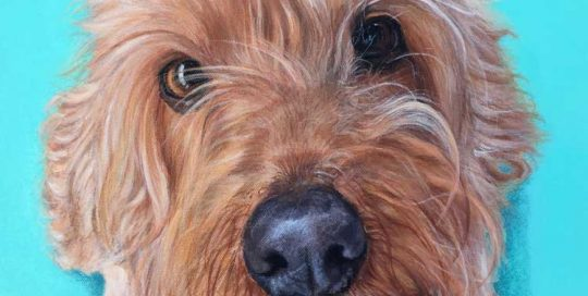 Golden Spoodle Dog Painting