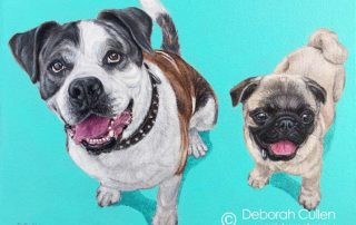 Dog Portrait of an Australian Bulldog and and Pug