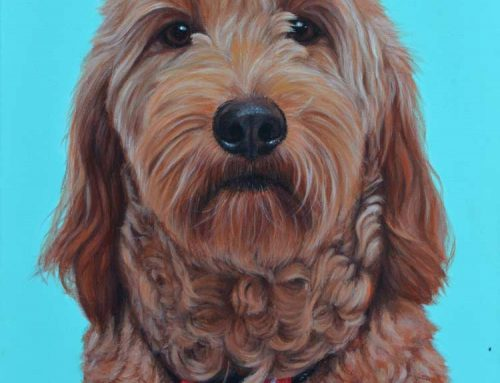 Susie – Groodle Dog Painting