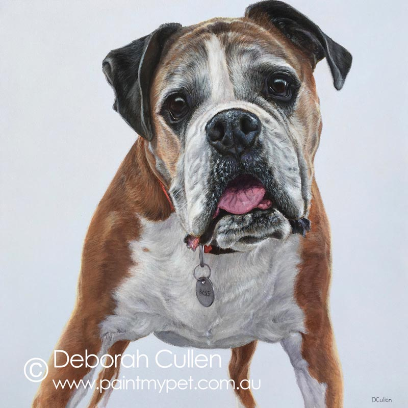 Boxer Pet Portrait