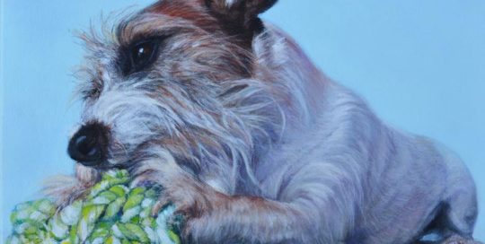 Jack Russell Terrier painting