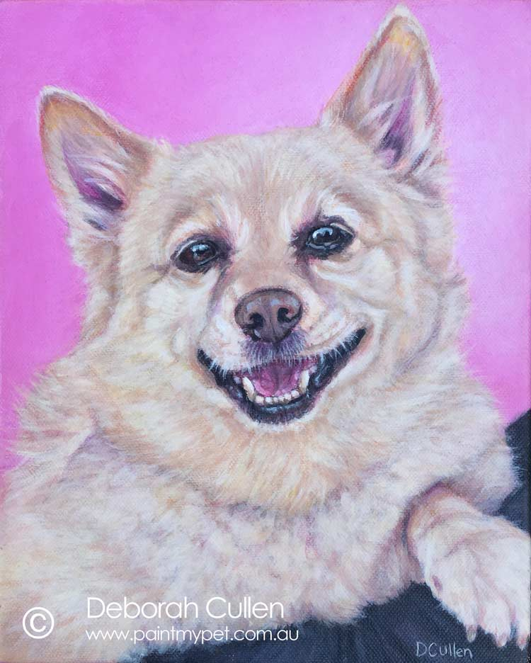 Golden Shipperke dog portrait
