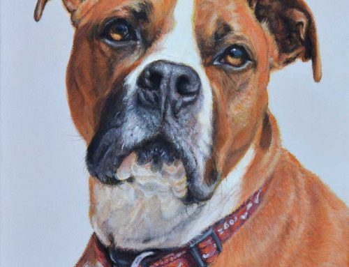 Finlay – American Staffordshire Terrier Dog Portrait Painting