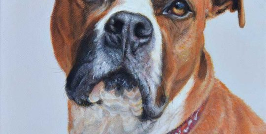 American Staffordshire Terrier Portrait Painting