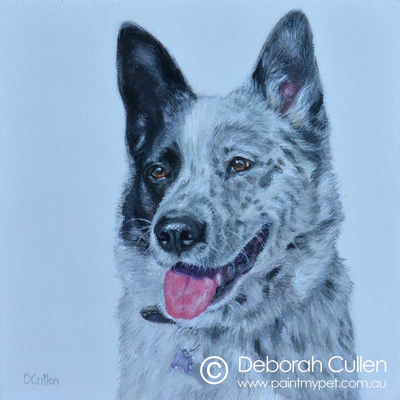 Painting of a Border Collie x Blue Heeler
