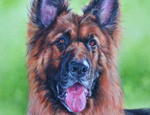 Boston – German Shepherd Dog Portrait