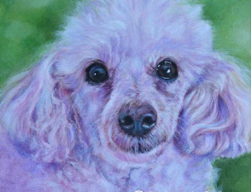 Chanel – Toy Poodle Dog Portrait