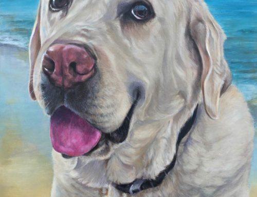Boston – Blonde Labrador Retriever