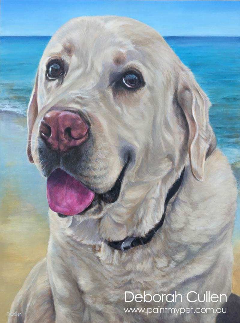 Pet portrait of a Blonde Labrador