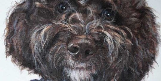 Pet Portrait of a Logotto Romagnolo