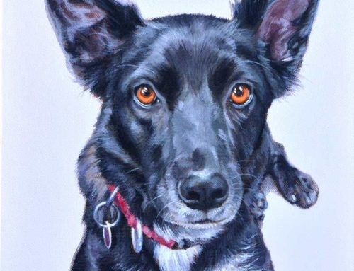 Annie – Kelpie x Border Collie Dog Portrait Painting
