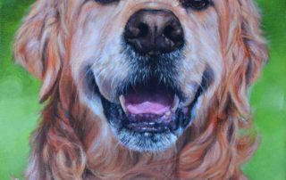 Golden Retriever Portrait