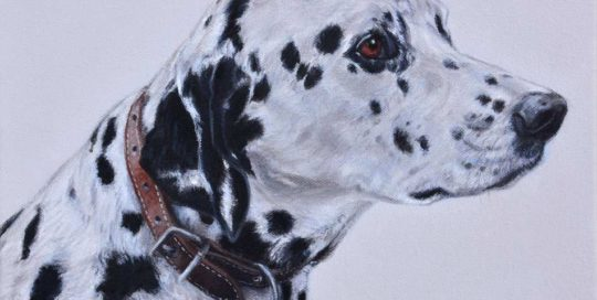 Dog Painting of a Dalmatian Dog
