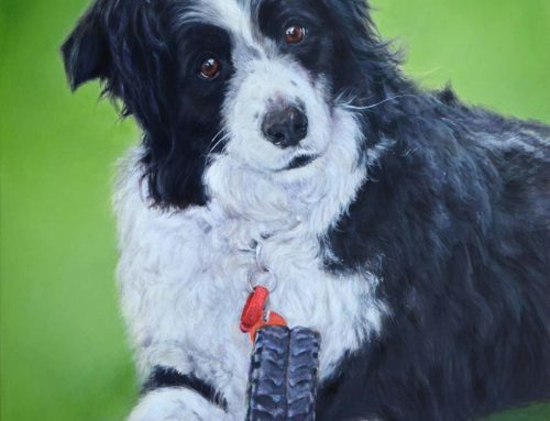 Pepsi – Border Collie Dog Portrait Painting