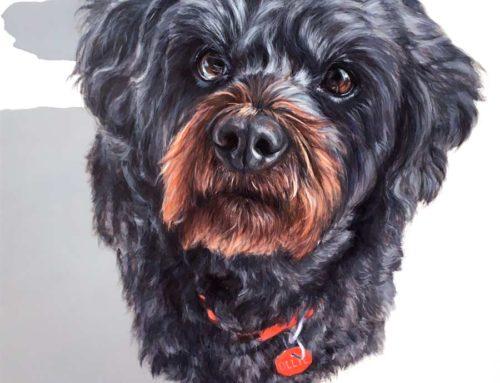 Ollie – Shihtzu x Poodle Dog Portrait Painting