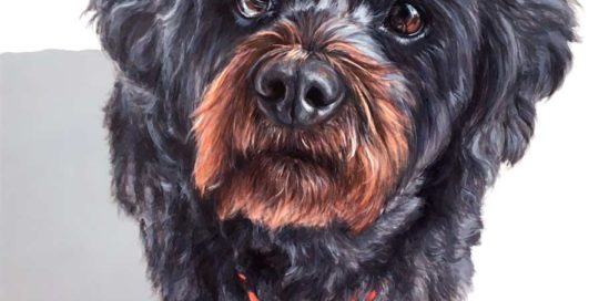 Dog painting of a Shihtzu x Poodle