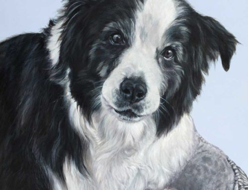 Toby – Border Collie Dog Portrait Painting