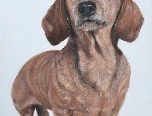 Charlie – Miniature Dachshund Dog Portrait Painting