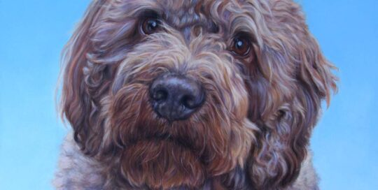 Labradoodle painting