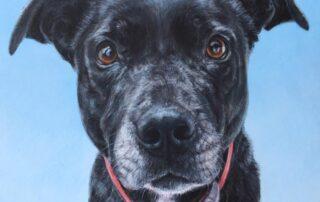 Dog Portrait of a Staffordshire Bull Terrier x