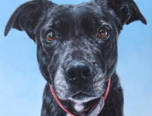 Lucinda Ann (Lucy) – Border Collie X Staffordshire Bull Terrier Dog Portrait Painting