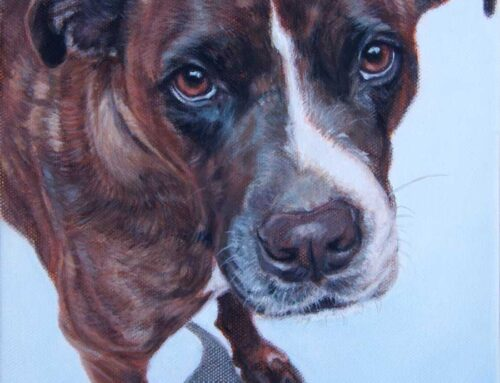 Lucy – Staffordshire Bull Terrier X Boxer Dog Portrait Painting