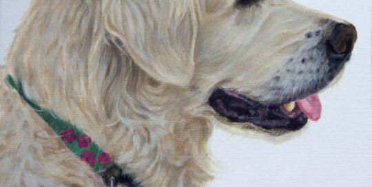 Dog Portrait of a Golden Retriever