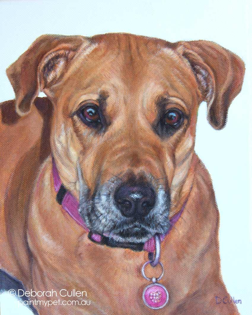 Ridgeback x Dog Portrait