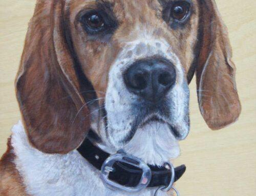 Rex – Beagle Dog Portrait Painting