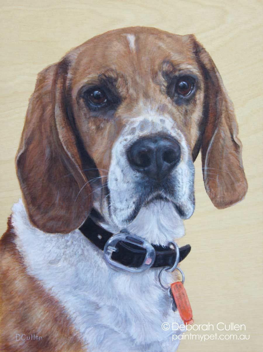Rex Beagle portrait