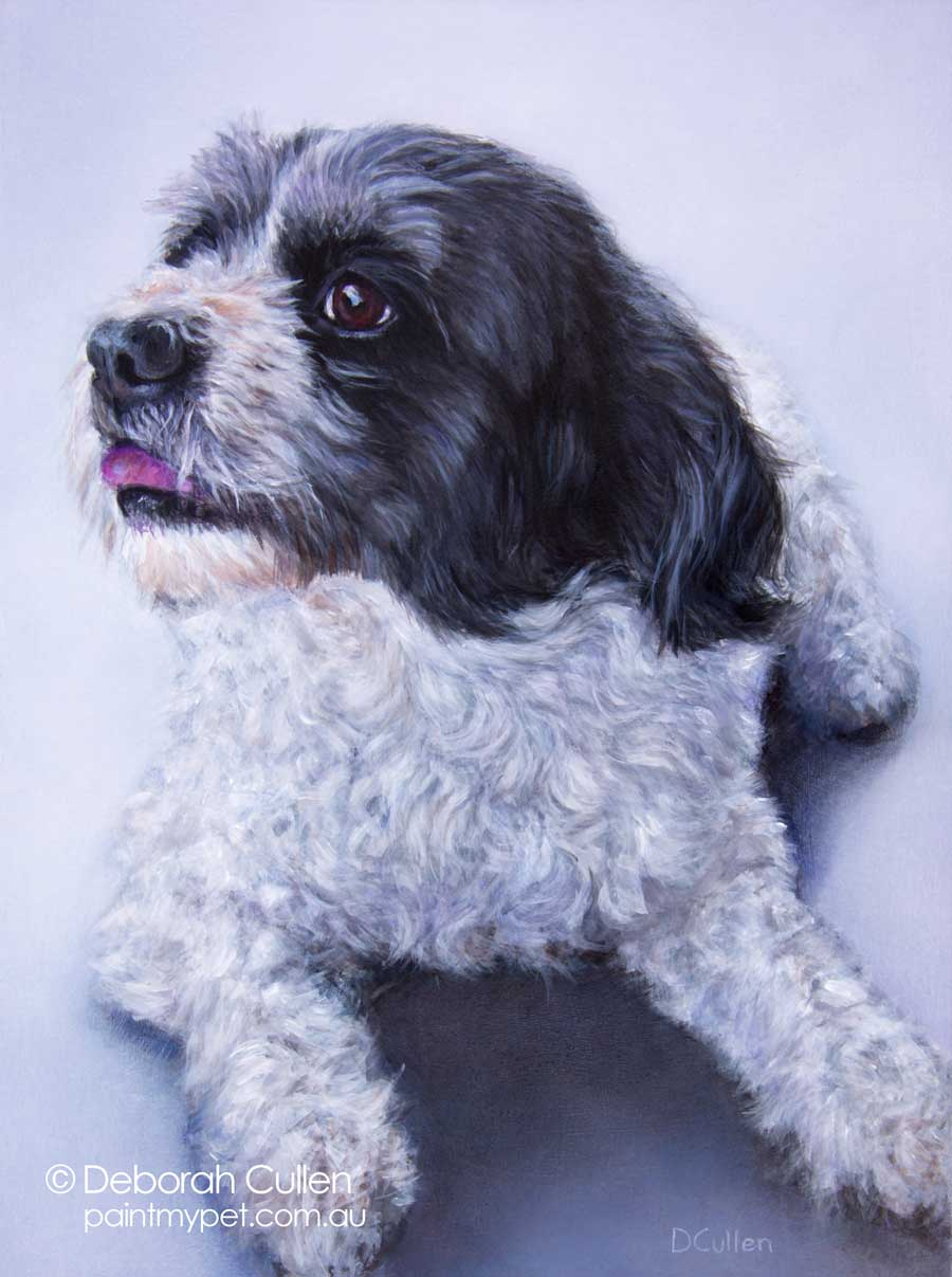 Dog portrait of a Grey, black and white Maltalier