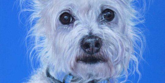 Maltese Terrier x Jack Russell painting